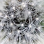 The Future of Medicine - Spiritual, Meditation