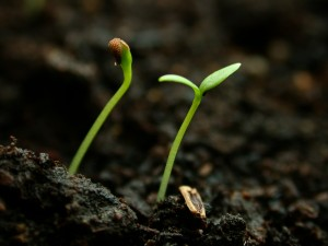 seedlings_014