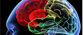 brain optimisation technology