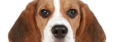 Dog makes 911 call