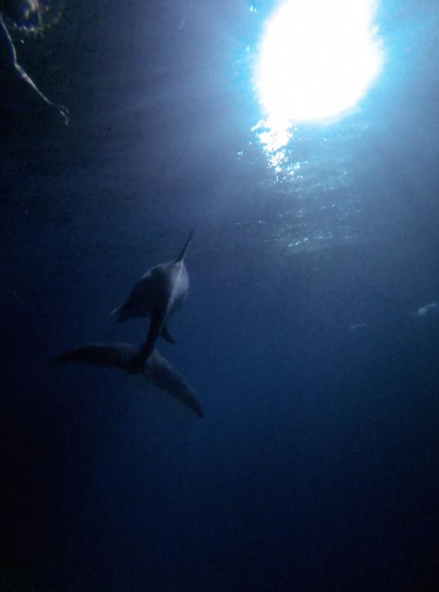 Breathtaking Underwater Relaxation