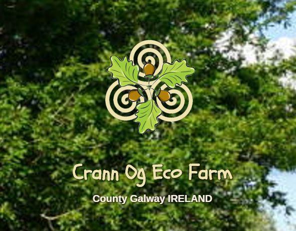 crann-ogg-image