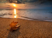 Beautiful sunrise over the sea and leaf. Autumn concept.