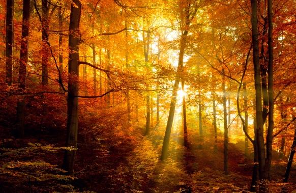 Autumn Vibes: The Toasts of the Season