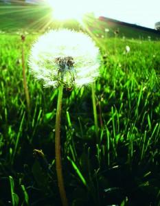 The Wonder of Weeds