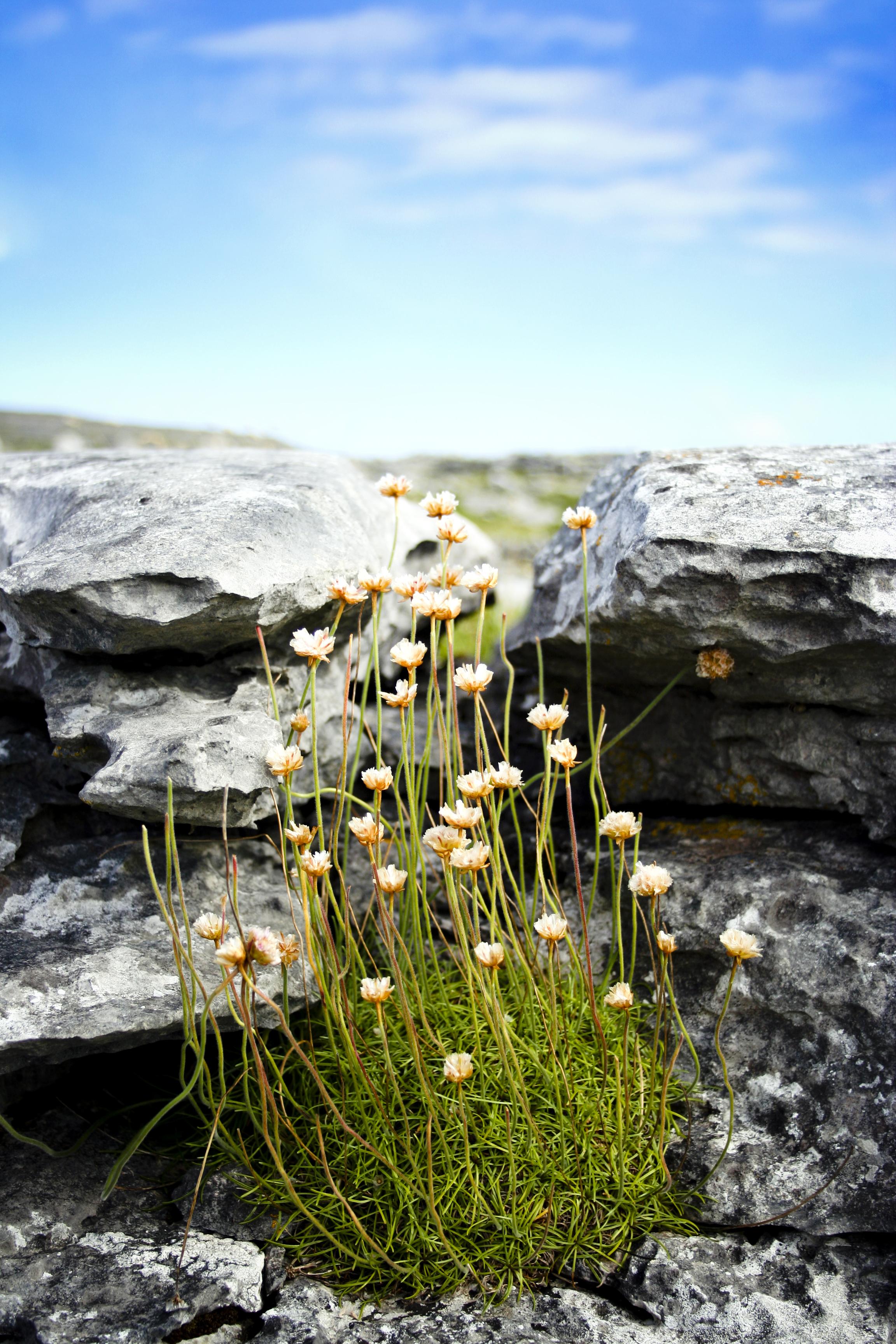 Health Retreats in Ireland: Holistic Ayurveda Wellness Retreat in Weir Haven, Galway